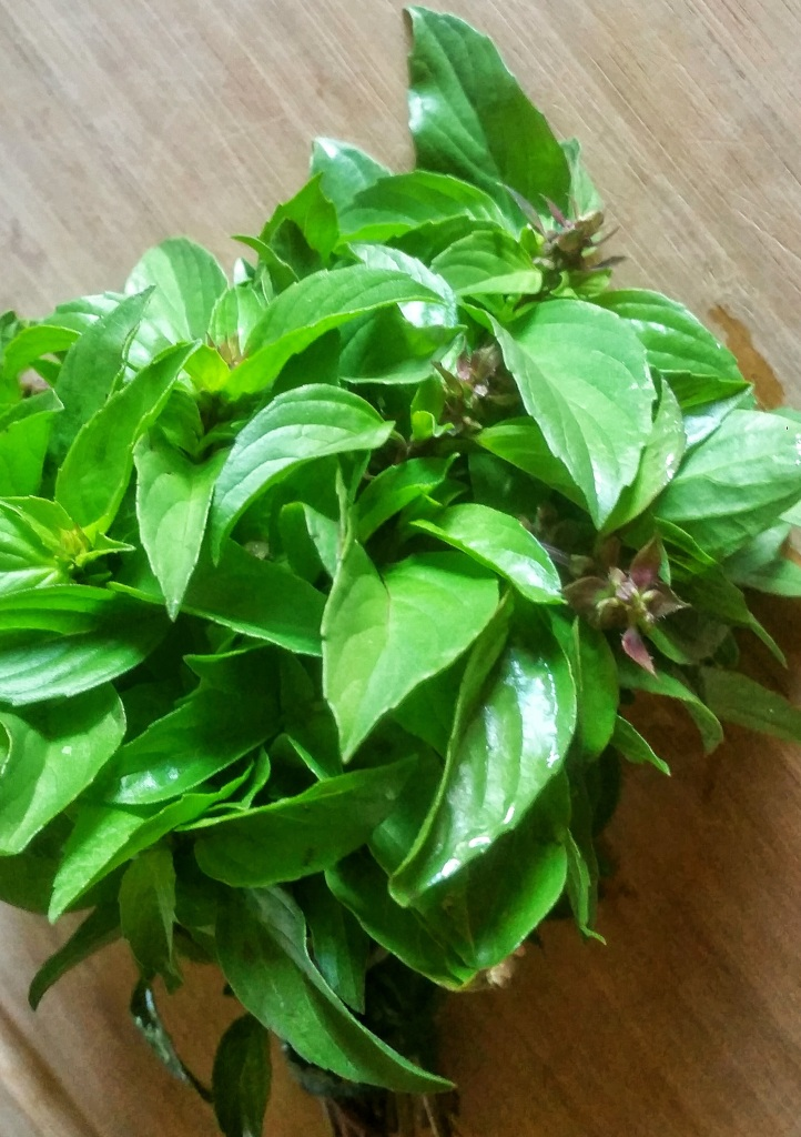 Fresh-Thai-Basil